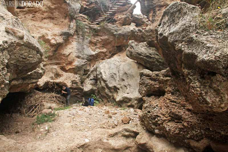 Expedición a la montaña de Montserrat, algunas especies endémicas