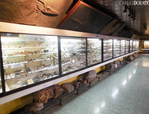 Paleontological Section of 'La Salle Museum' (Costa Rica) 2015