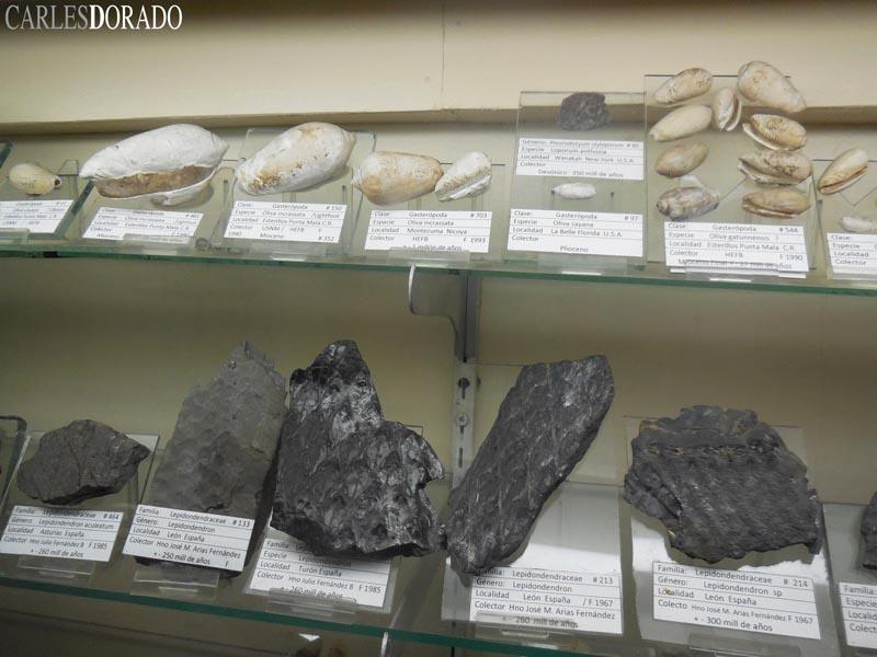 Sección Paleontológica del Museo La Salle (Costa Rica)