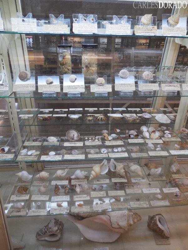 Sección Malacológica del Museo de la Salle (Costa Rica)