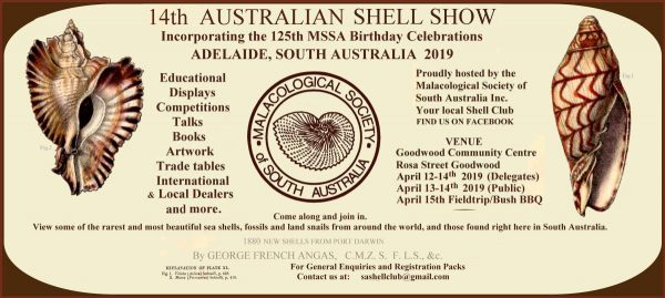 Australian 14th International Shell Show - 2019 @ Goodwood Community Centre | Goodwood | South Australia | Australia